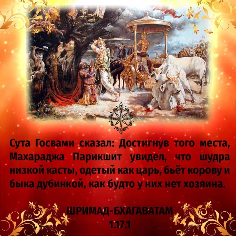 Сута Госвами сказал: Достигнув того места, Махараджа Парикшит увидел, что шудра низкой касты, одетый как царь, бьёт корову и быка дубинкой, как будто у них нет хозяина.